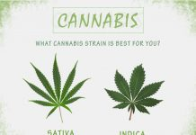 Cannabis Strains To Try