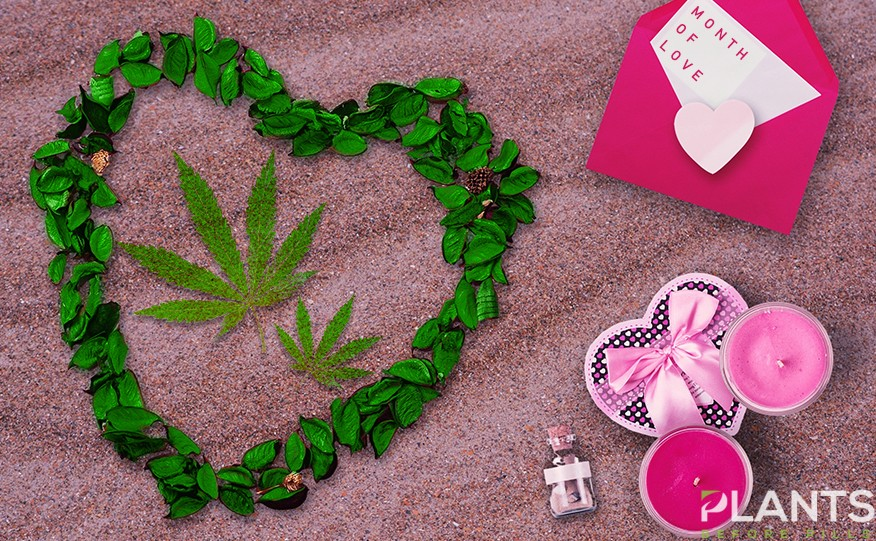 Cannabis this Valentines