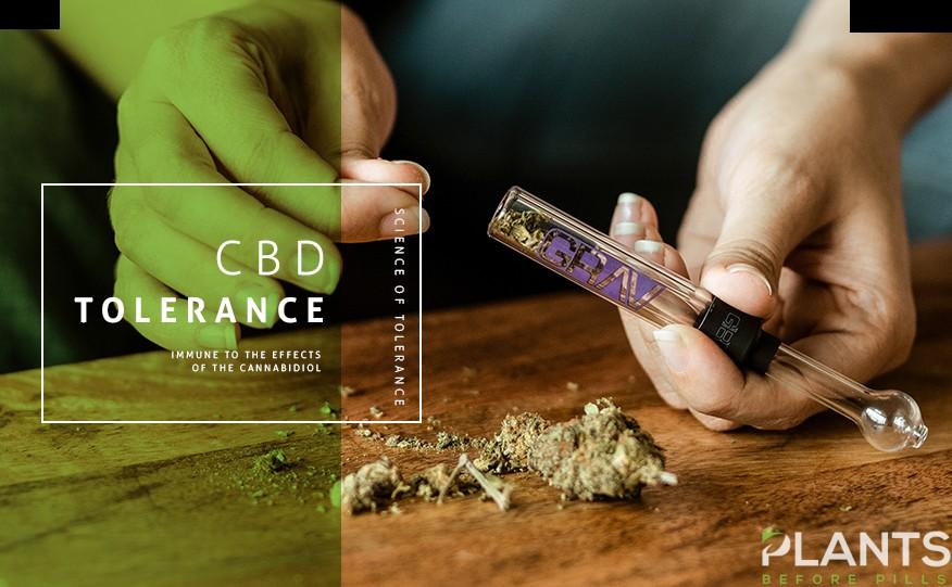 Questions About CBD Tolerance