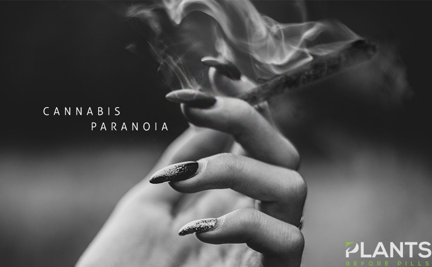 How To Counter Cannabis Paranoia
