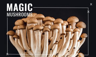 Psilocybin/Magic Mushrooms