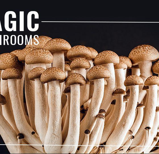 Psilocybin/Magic Mushrooms