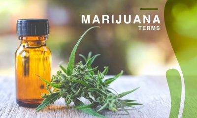 Marijuana Terms That You Should Know