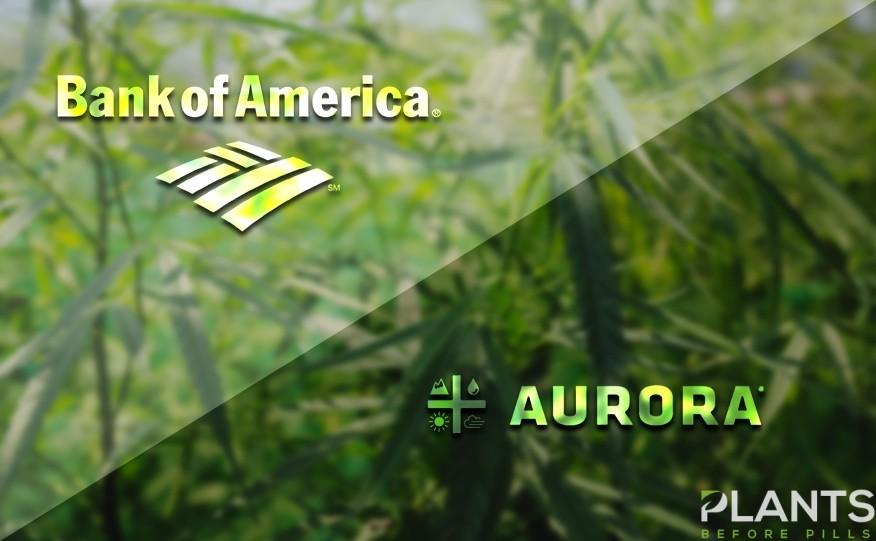 Aurora Cannabis Stocks Fell
