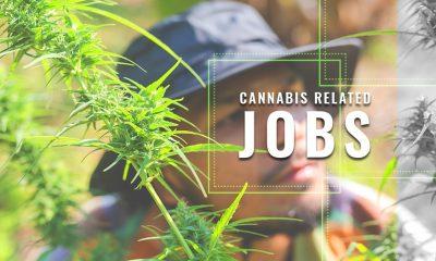 Cannabis Jobs