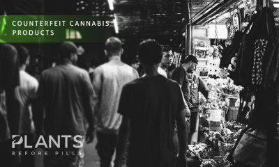 Fake Cannabis Products Permeating Saskatchewan Market