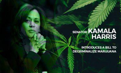 Kamala Harris to Decriminalize Cannabis