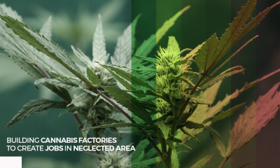 Cannabis Factories