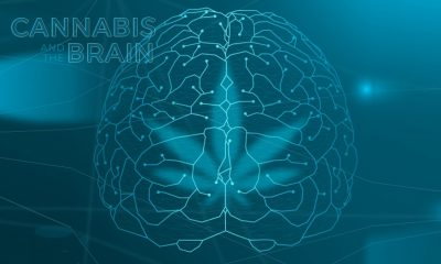 Cannabis and the Brain