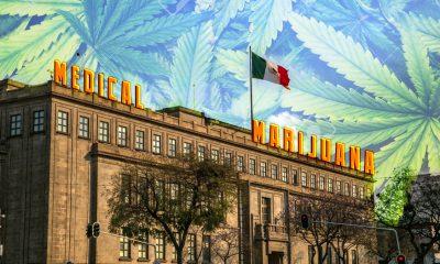 Mexico Medical Cannabis