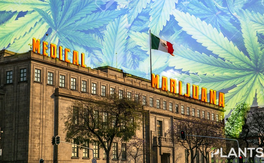 Mexico Medical Cannabis