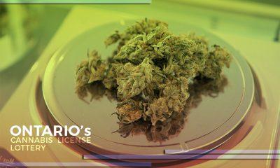 Ontario Cannabis License Lottery