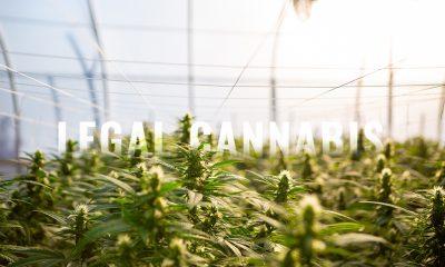 Canberra Legalizes Cannabis