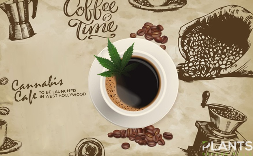 Cannabis Café in West Hollywood