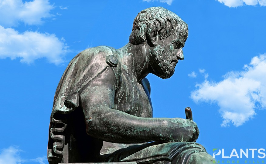 Celebrating World Philosophy Day with Cannabis