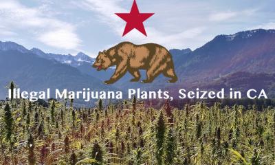 Illegal Marijuana Plants Seized in California