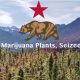 Illegal Marijuana Plants Seized in California