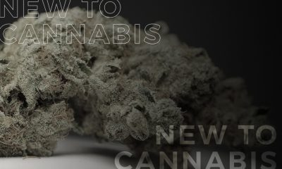 Why be in Cannabis Community