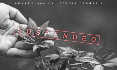 California Suspended Cannabis Licenses