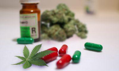 Medical Marijuana Now Free in Sicily