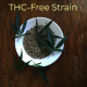 THC-Free Strain