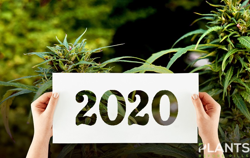 The Latest Cannabis Trends to Follow this 2020