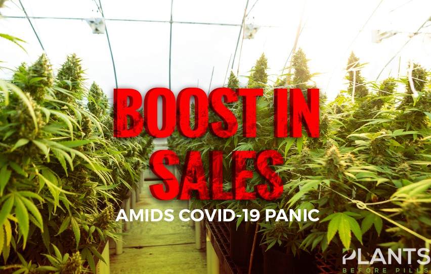 Cannabis Firms Experience Boost in Sales Amid Covid-19 Panic