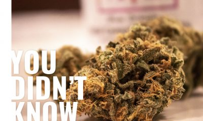 Here are 4 Things You Need to Know Before Trying CBD