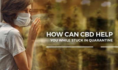 how cbd can help