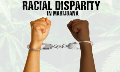 Racial Disparity in Marijuana Searches and Arrests