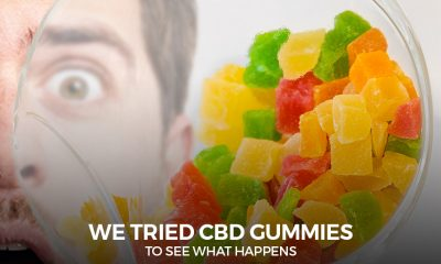 CBD Gummies To See What Happens