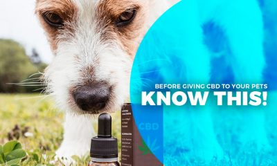 CBD to Your Pets