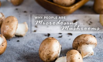 Why People are Microdosing Mushrooms