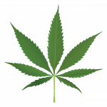 Pacific Cannabis Church – Dispensary