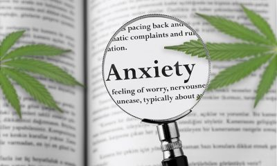 All you should know about using marijuana for treating anxiety