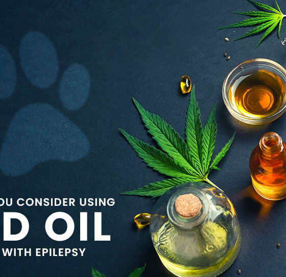 Should You Consider Using CBD for Dogs with Epilepsy