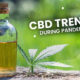 CBD Trends Pandemic