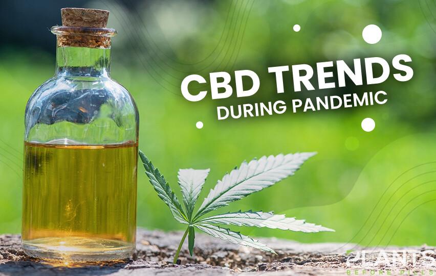 CBD Trends Pandemic
