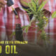 make extra strength CBD oil