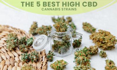 Best High-CBD Cannabis Strains