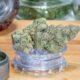 delta-9 THC Cannabis