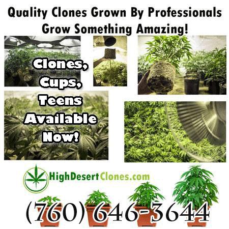 High Desert Clones