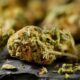 10 Interesting Facts About Cannabis that the Mainstream Media Won't Tell You