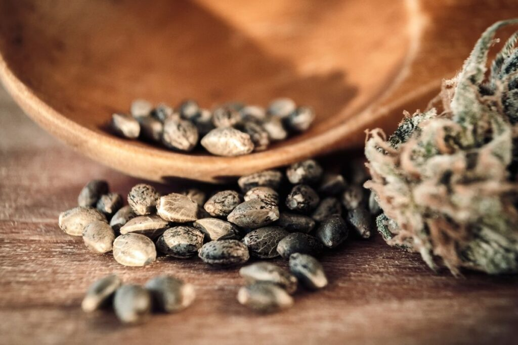 Buy Seeds for Strains Accustomed to the Climate
