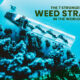 STRONGEST WEED Strains in the World